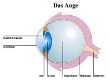 das gesunde Auge